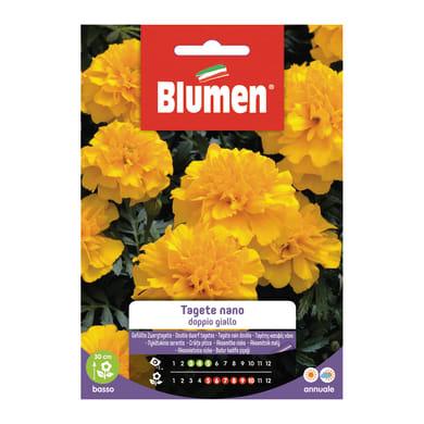 Seme fiore Tagete nano doppio giallo nan