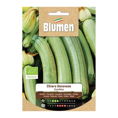 Seme per orto Zucchina zucchini chiari