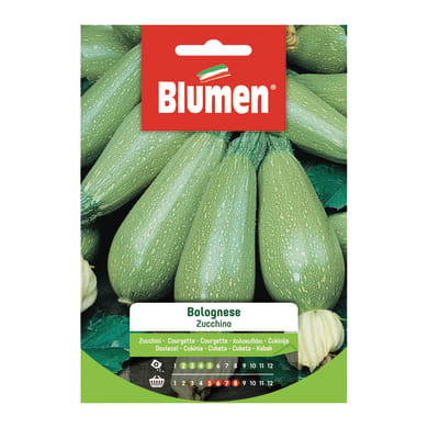 Seme per orto zucchino bolognese