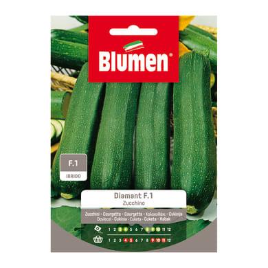 Seme per orto Zucchina zucchino diamant