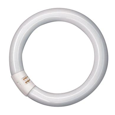 Tubo Fluorescente a doppio attacco L32865CN 2250 LM bianco freddo L 30.5 cm