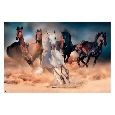 Poster Five horses 91.5x61 cm