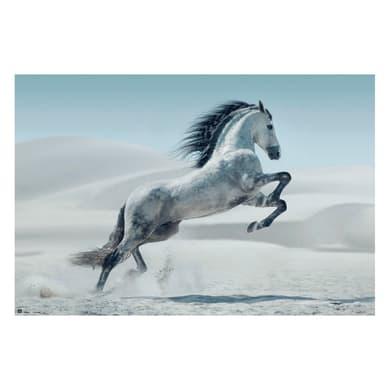 Poster Cavallo Andaluso 91.5x61 cm