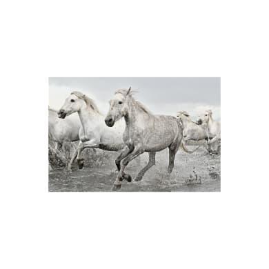 Poster White horses 91.5x61 cm