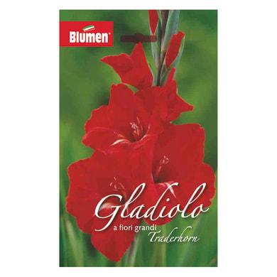 Bulbo fiore BLUMEN traderhorn rosso confezione da 36