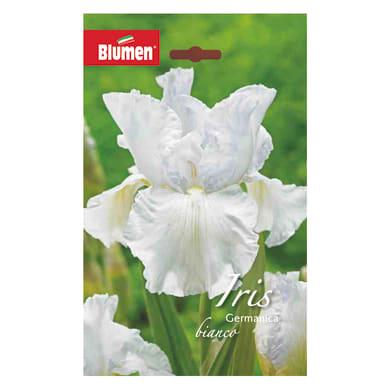 Bulbo fiore BLUMEN bianca bianco confezione da 6
