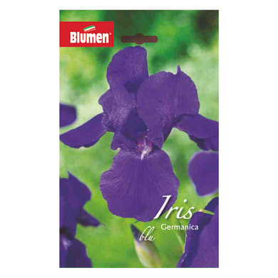 Bulbo fiore BLUMEN blu viola confezione da 6