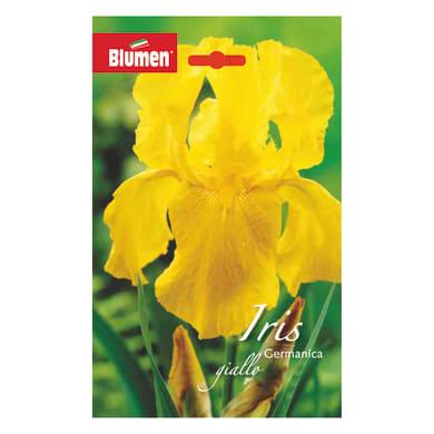 Bulbo fiore BLUMEN gialla giallo confezione da 6