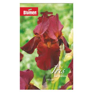 Bulbo fiore Iris Germanica rosso confezione da 6