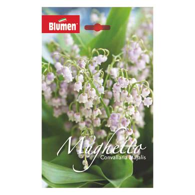 Bulbo fiore Convallaria majalis bianco confezione da 30