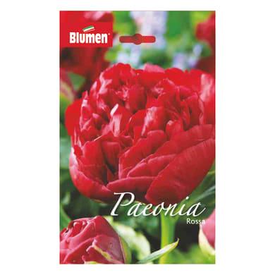 Bulbo fiore BLUMEN rossa rosso confezione da 6
