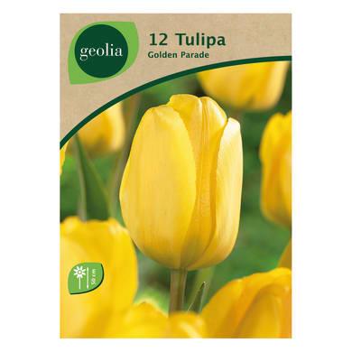 Bulbo fiore GEOLIA Tulipano giallo 12 pezzi