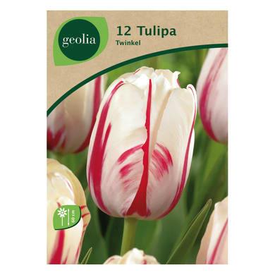 Bulbo fiore GEOLIA Tulipano rosso/bianco 12 pezzi