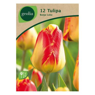 Bulbo fiore GEOLIA Tulipano giallo/rosso 12 pezzi