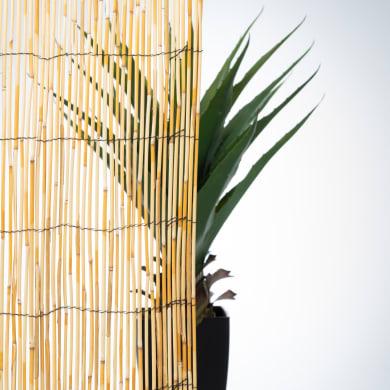Arella bambù L 3 x H 1 m