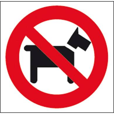 Sticker Vietato ai cani plastica 17 x 17 cm