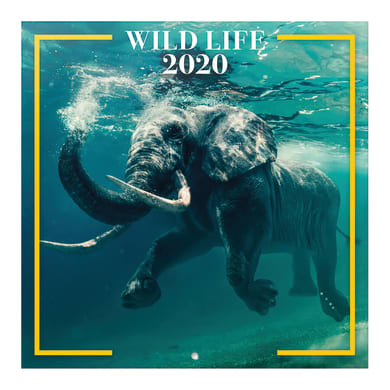 Poster animali selvaggi 30x30 cm
