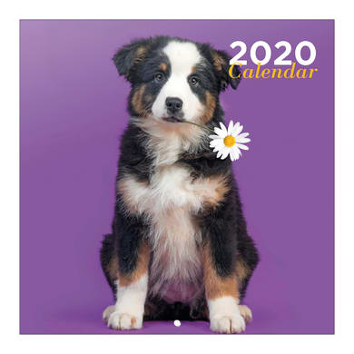 Poster cani 30x30 cm