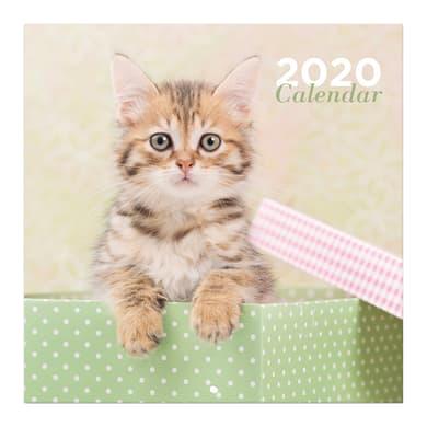 Poster gatti 30x30 cm
