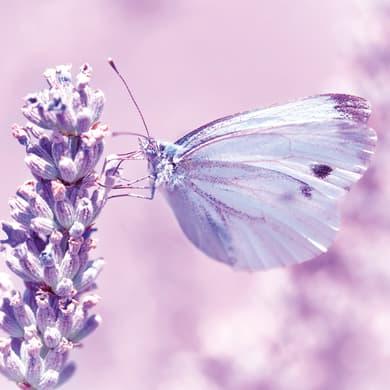 Sticker Farfalla 19x19 cm