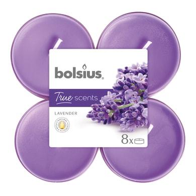 Candela BOLSIUS essenza lavanda  Ø 11.5 cm H 4.6 cm, 8 pezzi