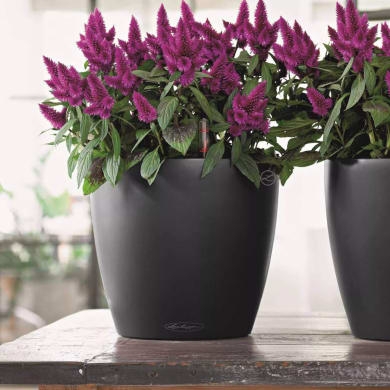 Vaso Classico Color LECHUZA in polipropilene grigio H 33 Ø 35 cm