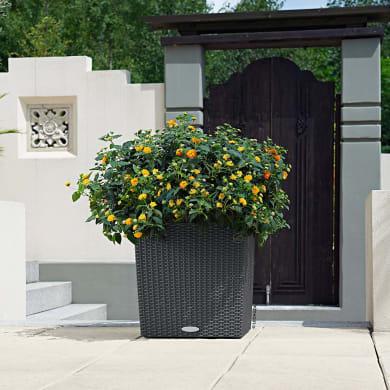Vaso Cubico Cottage LECHUZA in plastica grigio H 40 , L 40 X P 40 cm  Ø 20 cm