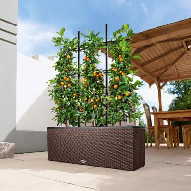 Vaso Trio Cottage LECHUZA in plastica marrone H 44 , L 130 X P 42 cm