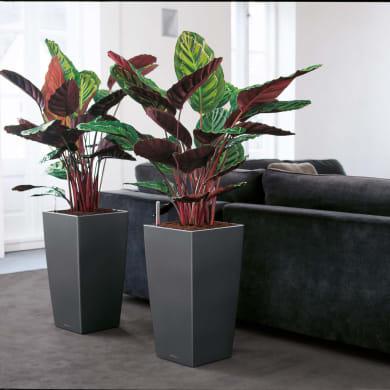 Vaso Cubico Color LECHUZA in polipropilene grigio H 40 , L 40 X P 75 cm