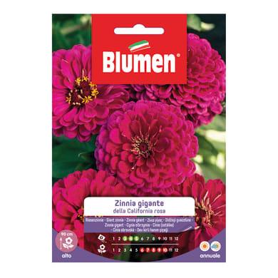 Seme fiore ZINNIA GIGANTE ROSA nan20 g