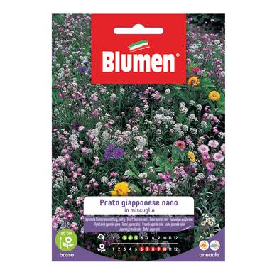 Seme fiore PRATO GIAPPONESE NANO nan20 g