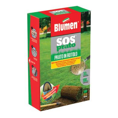 Seme per prato BLUMEN 1 kg
