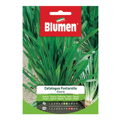 Seme per orto cicoria catalogna puntarelle a foglia stretta - cichorium intybus l. (partim) - normativa ce - cat. standard