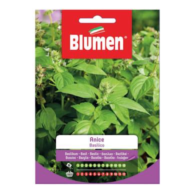 Seme per orto basilico anice - ocimum basilicum l. - cat. commerciale - germ. 65%, pur. 97%