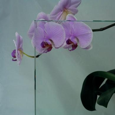 Vetro trasparente L 100 x H 160.5 cm, Sp 3 mm