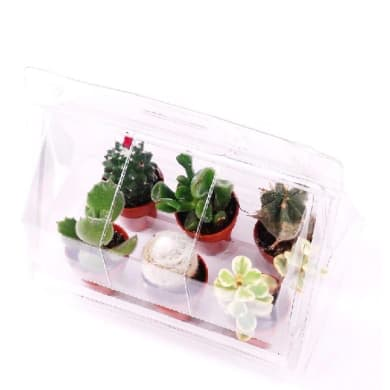 Serretta 6 piante 19 cm Multicolore