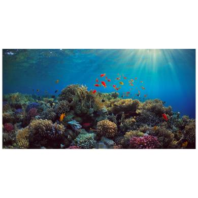 Quadro su tela Pesci sulla barriera corallina 145x75 cm