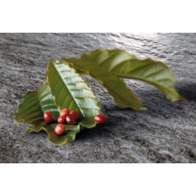 Piastrella Pierre de Vals Riein Noir 25.2 x 25.2 cm sp. 9.2 mm PEI 4/5 grigio scuro