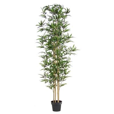 Albero erba