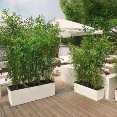 Fioriera Trio Cottage con set autoirrigazione Lechuza bianco