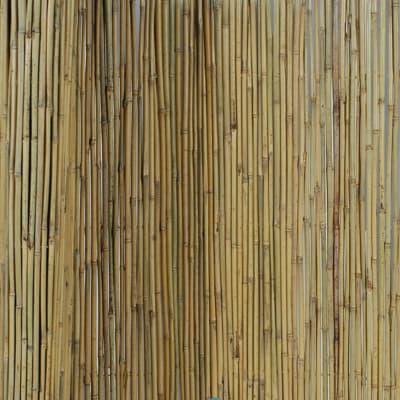 Canniccio naturale Arella Canna Passante naturale L 3 x H 1 m