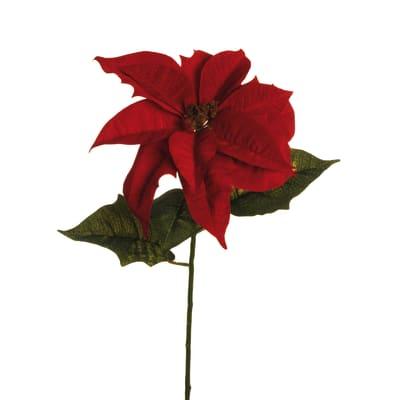 Prezzo Stella Di Natale.Fiore Stella Di Natale Prezzi E Offerte Online Leroy Merlin