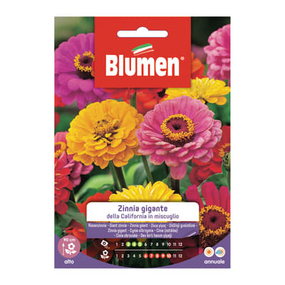 Seme fiore Zinnia gigante California in miscuglio nan