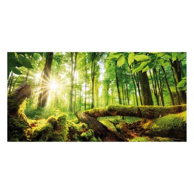 Quadro su tela bosco 120x60 cm prezzi e offerte online for Leroy merlin quadri tela